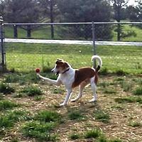 Adopt A Pet :: Slim Jim - Perryville, MO