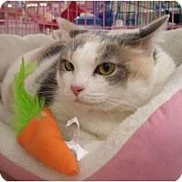 Adopt A Pet :: Clarice - Chesapeake, VA