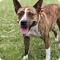 Adopt A Pet :: Charlotte - Gilbert, AZ