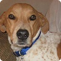Adopt A Pet :: Joey - Golden Valley, AZ