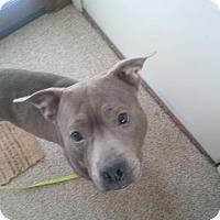 Adopt A Pet :: LAYLA - Kimberton, PA
