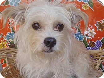 Terrier (Unknown Type, Small) Mix Dog for adoption in Encino, California - Kal