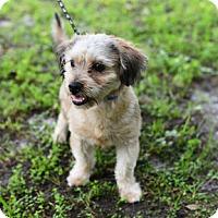 Adopt A Pet :: A - Jupiter, FL