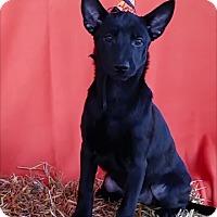 Adopt A Pet :: Glinda - East Sparta, OH