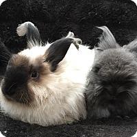 Adopt A Pet :: Wasabi & Hiro - Watauga, TX