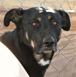 German Shepherd Dog Mix Dog for adoption in San Tan Valley, Arizona - Jack
