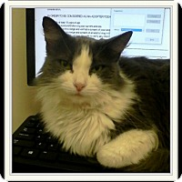 Adopt A Pet :: Sapphire - Trevose, PA
