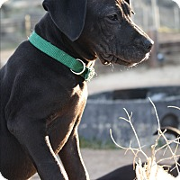Adopt A Pet :: Zazu - Tehachapi, CA