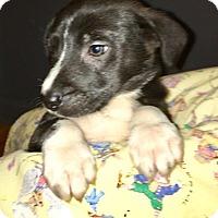 Adopt A Pet :: Bowie - Sparta, NJ