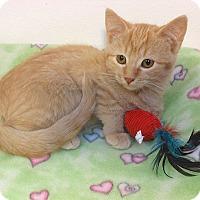 Adopt A Pet :: Maddie - Glendale, AZ