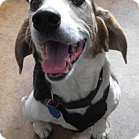 Adopt A Pet :: Riley - House Springs, MO