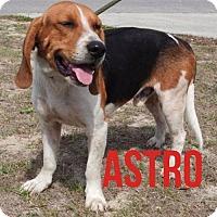 Adopt A Pet :: Astro - New Smyrna beach, FL
