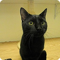 Adopt A Pet :: Binxster - Milwaukee, WI