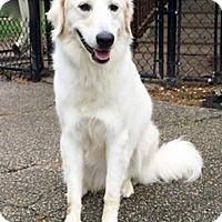 Adopt A Pet :: Juna - BIRMINGHAM, AL