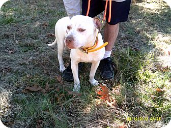 American Pit Bull Terrier Mix Dog for adoption in Dundas, Virginia - Annie