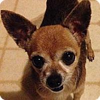 Adopt A Pet :: Tuffy - Poulsob, WA