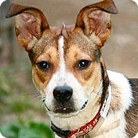 Adopt A Pet :: Daniella - Hastings, NY