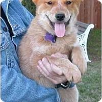 Adopt A Pet :: Deaglan - Phoenix, AZ