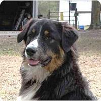 Adopt A Pet :: Boone - Orlando, FL