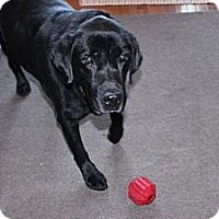 Adopt A Pet :: Jake - New Boston, MI
