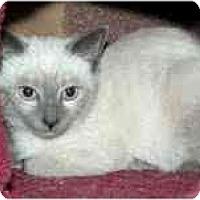 Adopt A Pet :: Dylan & Darma - Arlington, VA