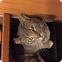 Adopt A Pet :: Smokey Girl - Chattanooga, TN