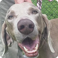 Adopt A Pet :: Lilly - Birmingham, AL