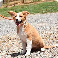 Adopt A Pet :: Julian - Groton, MA