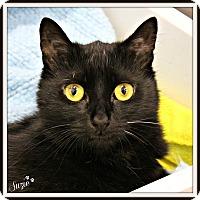 Adopt A Pet :: Suzie - Dunkirk, NY