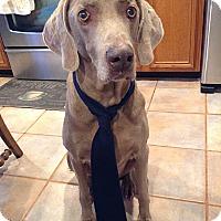 Adopt A Pet :: Von - Grand Haven, MI