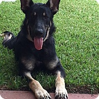 Adopt A Pet :: Owen - Houston, TX