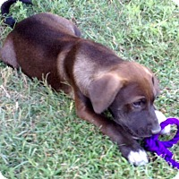 Adopt A Pet :: Dusty - Woodward, OK