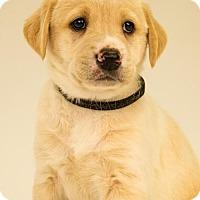Adopt A Pet :: Rebecca - Centreville, VA