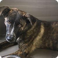 Adopt A Pet :: Tate - Paso Robles, CA