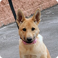 Adopt A Pet :: Daisy - Palmdale, CA
