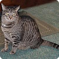 Adopt A Pet :: Wednesday - N. Billerica, MA