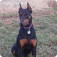 Adopt A Pet :: Sara - New Richmond, OH