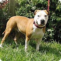 Adopt A Pet :: Rusty.Water Pup - Sacramento, CA