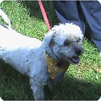 Adopt A Pet :: Russell - Brewster, NY