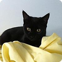 Adopt A Pet :: Clarissa - Jenkintown, PA