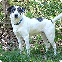 Adopt A Pet :: Griswold - Mocksville, NC