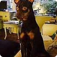 Adopt A Pet :: Monk - McDonough, GA