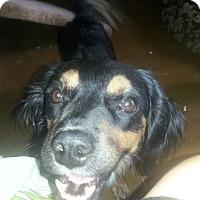 Adopt A Pet :: Ricky - Phoenix, AZ