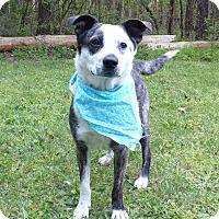 Adopt A Pet :: Dolly - Mocksville, NC