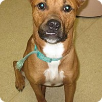Adopt A Pet :: Lucy - Gary, IN