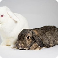 Adopt A Pet :: Salt and Pepper - Kingston, ON