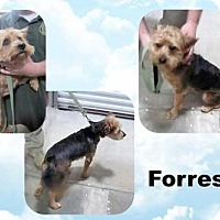 Adopt A Pet :: FORREST ~ BEAUTIFUL SCRUFFY - Hanover, PA