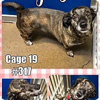 Adopt A Pet :: Cage 19 - Greenville, TX