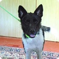 Adopt A Pet :: Ashe - Portland, ME
