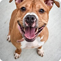 Adopt A Pet :: Bonnie - Prince George, VA